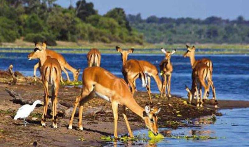 Shambe National Park